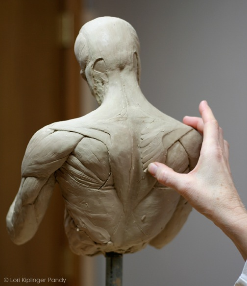 Anatomy sculpture for artists